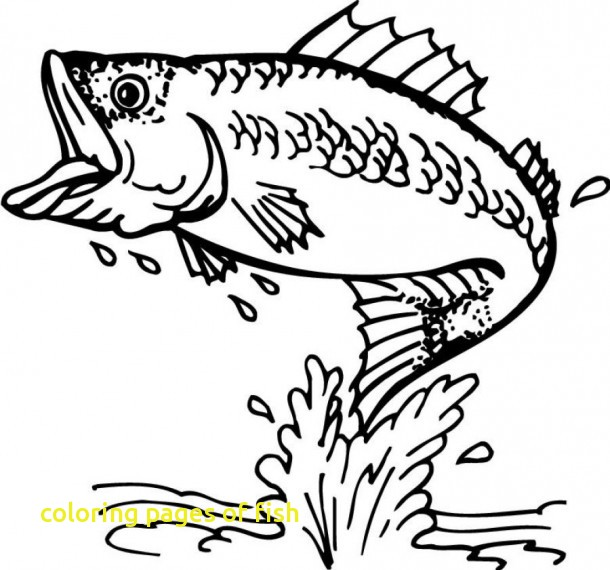 610x570 Coloring Pages Of Fish With Bass Fish Coloring Pages Animals