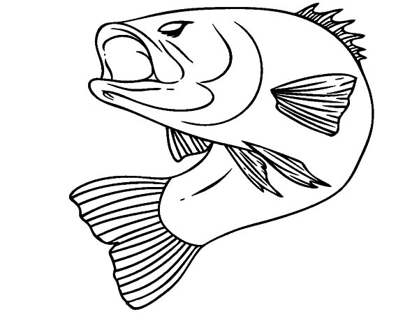 600x450 Bass Fish Coloring Pages