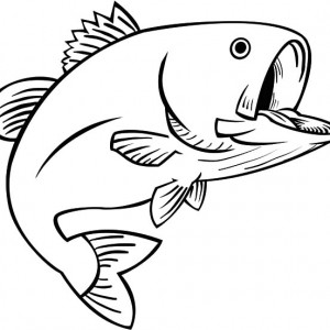 300x300 Guadalupe Bass Fish Coloring Pages Guadalupe Bass Fish Coloring