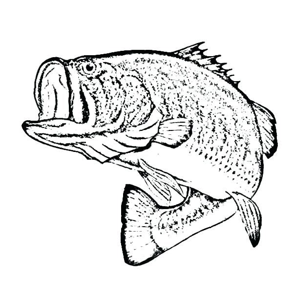 600x612 Here Are Fishing Coloring Pages Images Bass Coloring Pages Little