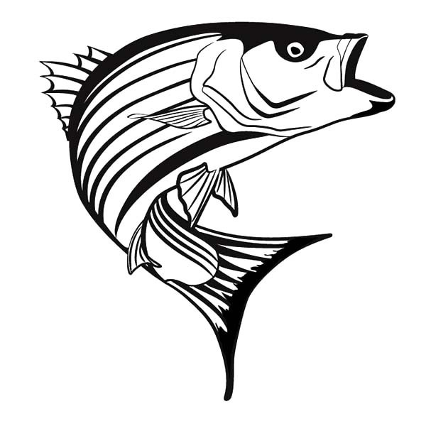 600x600 Striper Bass Fish Coloring Pages Best Place To Color