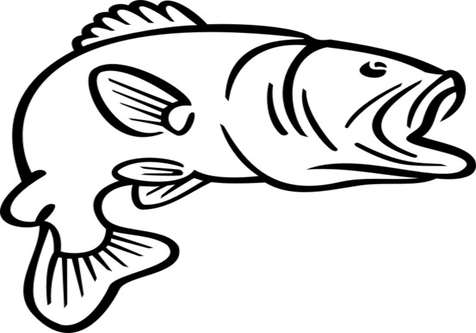 476x333 Bass Fish Jumping Coloring Pages Page Image Clipart Images