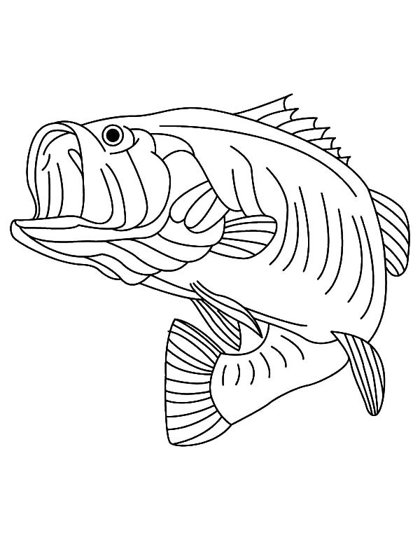 600x771 Top 74 Bass Coloring Pages