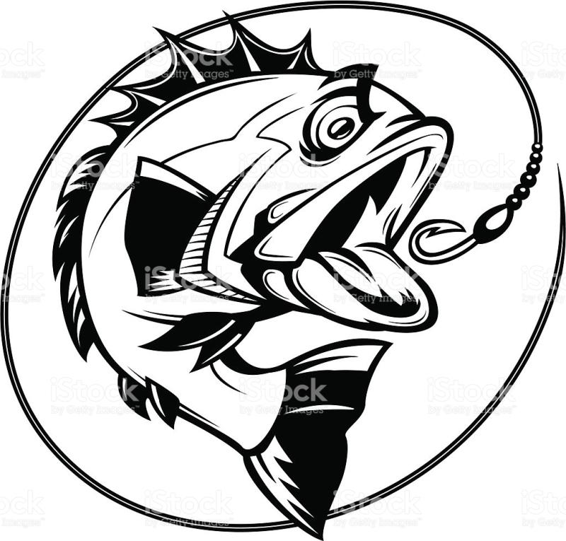 800x765 Bass Fish Pictures Clip Art