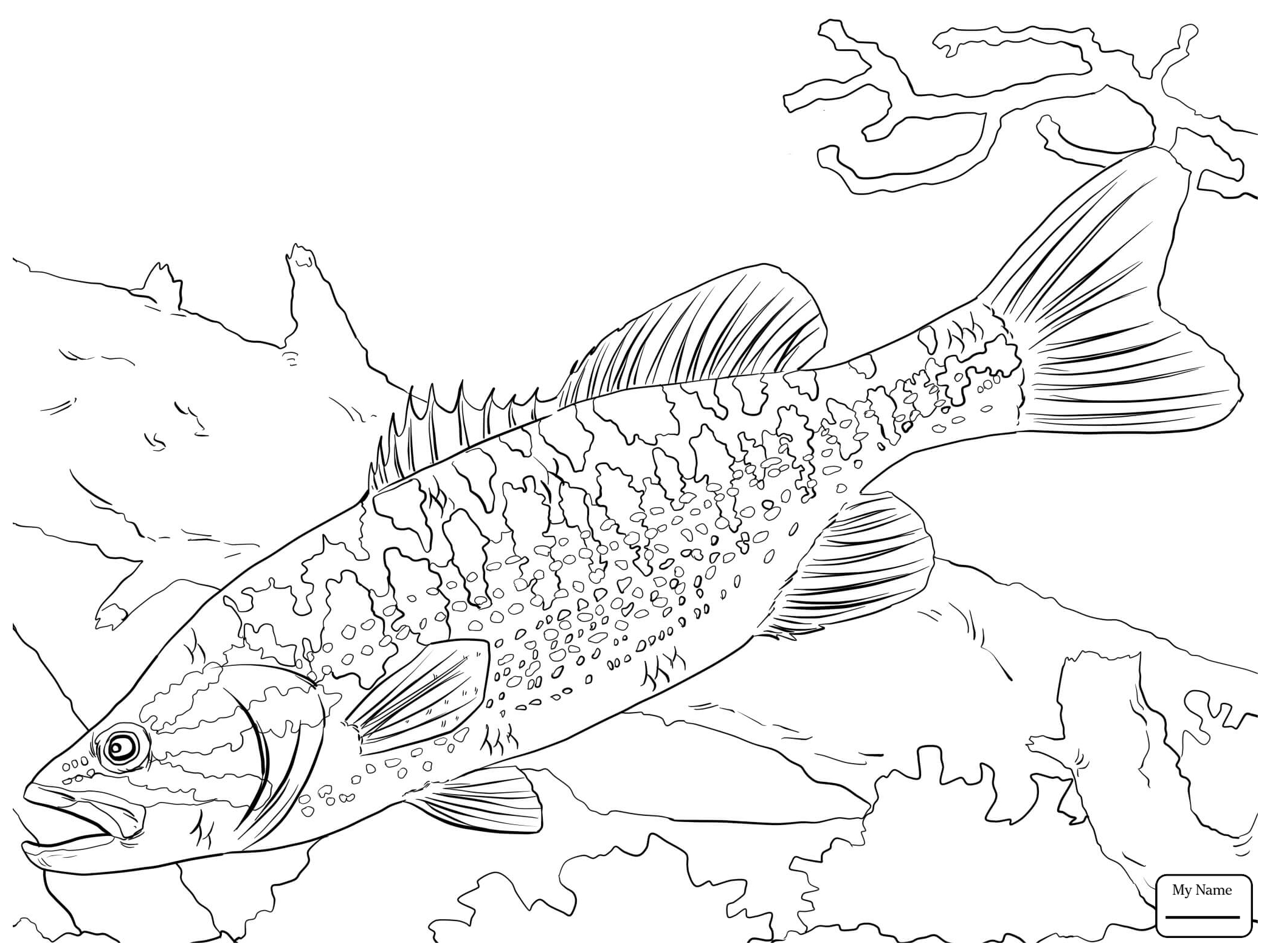 2089x1567 Coloring Pages Bass Fish Fish