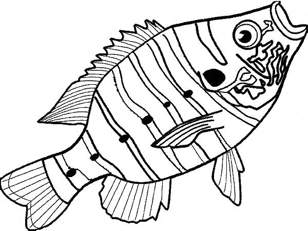 600x450 Delicious Bass Fish Coloring Pages Best Place To Color