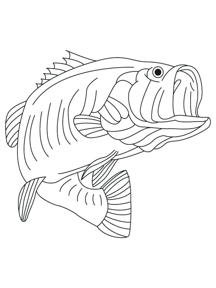 750x1000 Largemouth Bass Coloring Pages Largemouth Bass Drawings