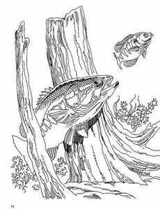 230x300 77 Best Stencils Images On Bass Fishing, Colouring