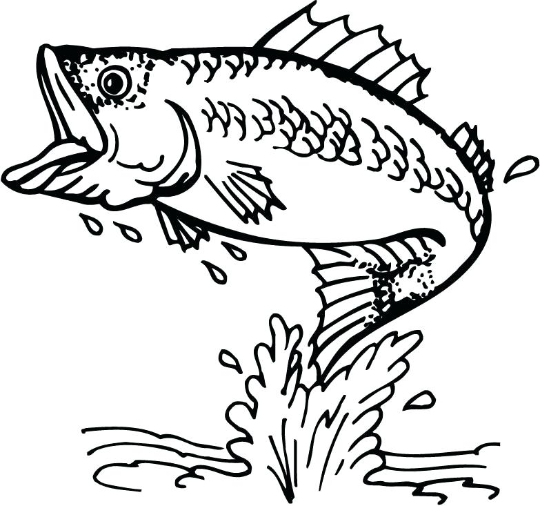 783x733 Realistic Fish Coloring Pages Bass Fish Realistic Coloring Pages