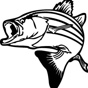 300x300 Texas Largemouth Bass Fish Coloring Pages Best Place To Color