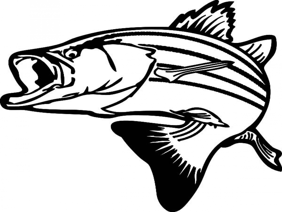 1152x864 Bass Fish Jumping Coloring Pages Drawing Stripped
