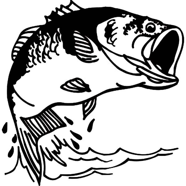 600x600 Fishing Bass Fish Coloring Pages Best Place To Color