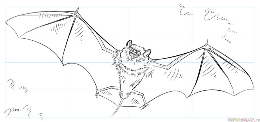 900x423 How To Draw A Realistic Bat Step By Step Drawing Tutorials