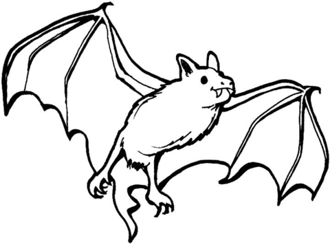 480x355 Vampire Bat Coloring Page Free Printable Coloring Pages