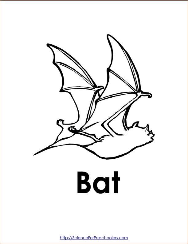 612x792 Bats