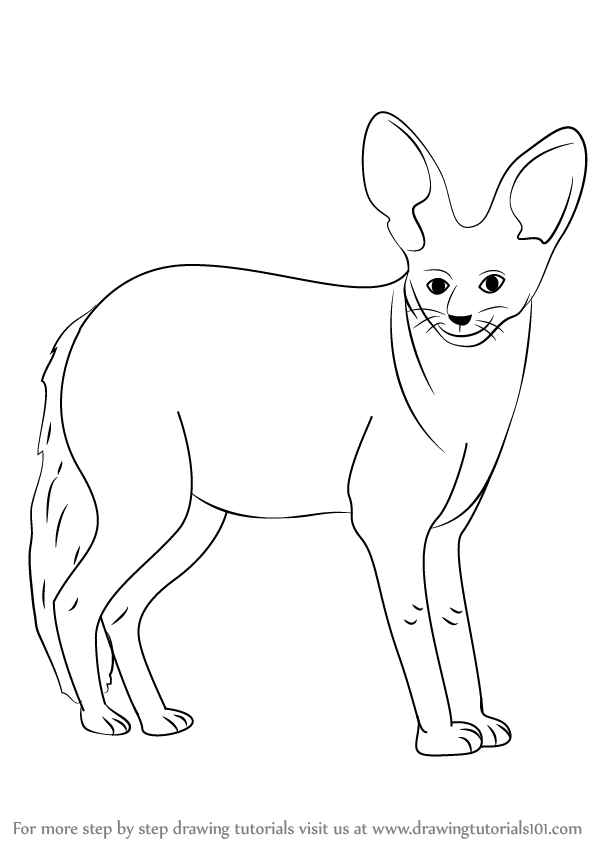 598x844 Learn How To Draw A Bat Eared Fox (Wild Animals) Step By Step