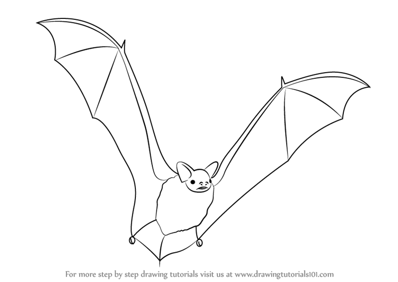800x566 Learn How To Draw A Big Brown Bat (Other Animals) Step By Step