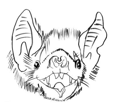400x377 Bat Drawing 045