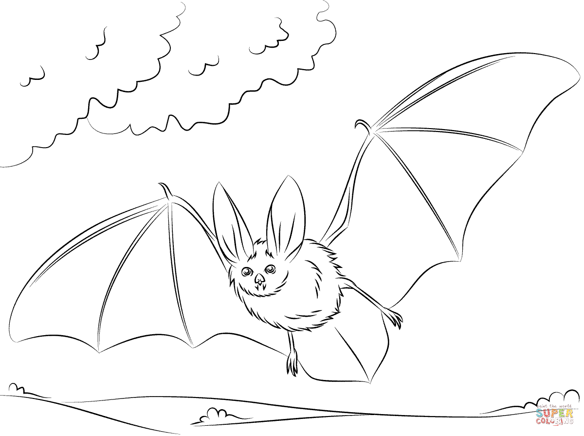 1200x895 Townsend's Big Eared Bat Coloring Page Free Printable Coloring Pages