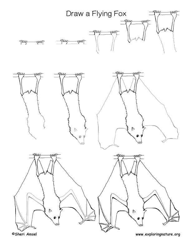 Bat Drawing Images