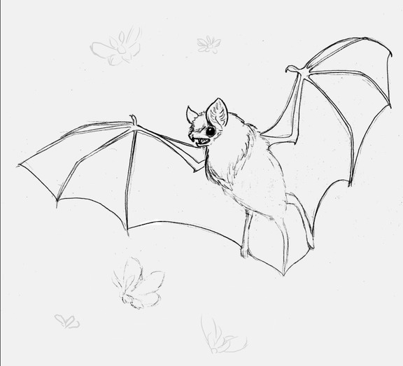 576x523 Bat [Sketch] By Julia Vysotskaya (Hochulia), From The Series