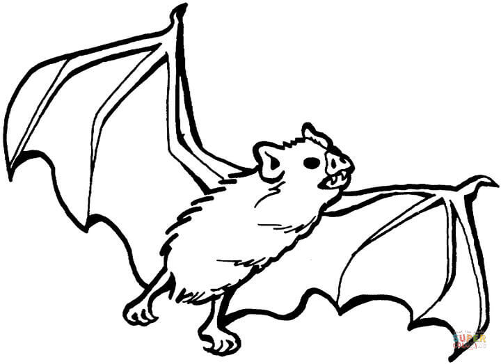 720x523 Download Coloring Pages Draw A Bat