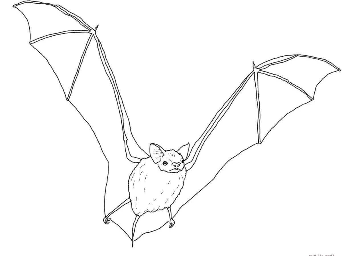 1200x900 Realistic Bat Coloring Pages Free Page Of A For Kids Animals