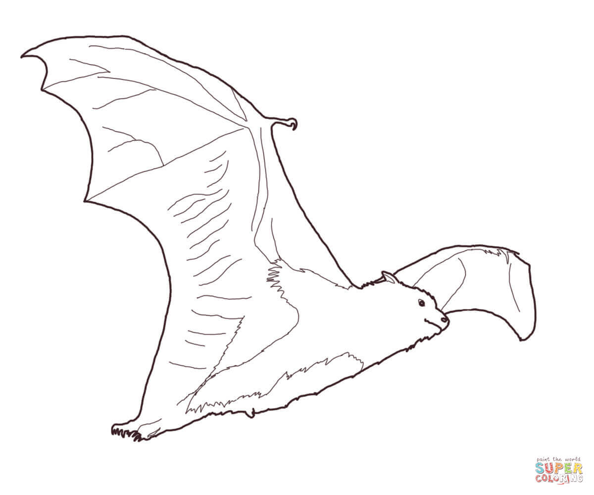 1200x1000 Fruit Bat Coloring Page Free Printable Coloring Pages