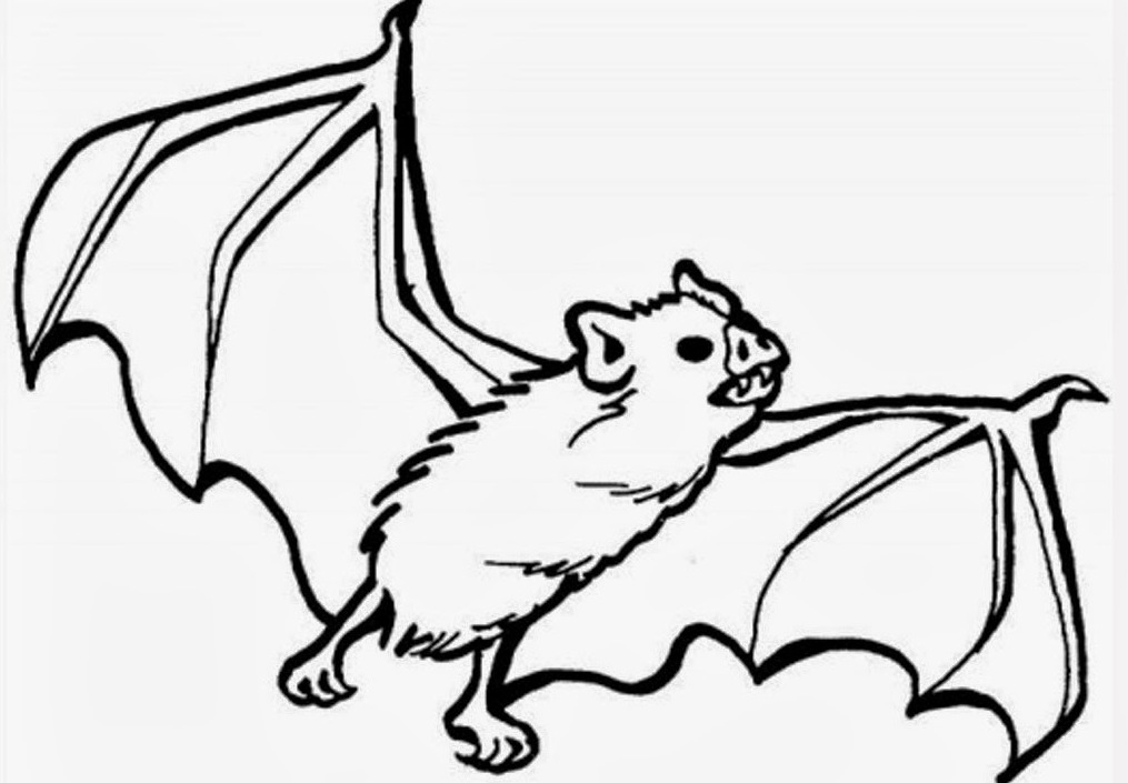 1015x705 Animal Bat Coloring Pages
