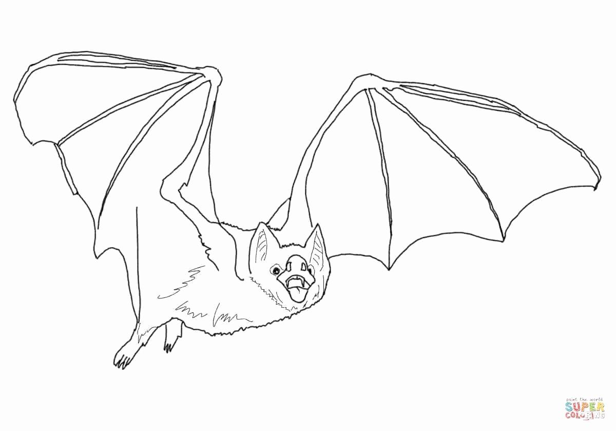 Bat Drawing Template at GetDrawings Free for