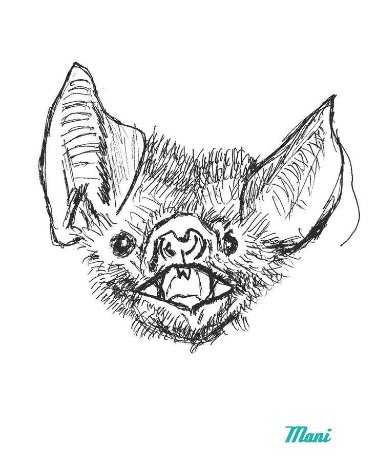 Bat Line Drawing