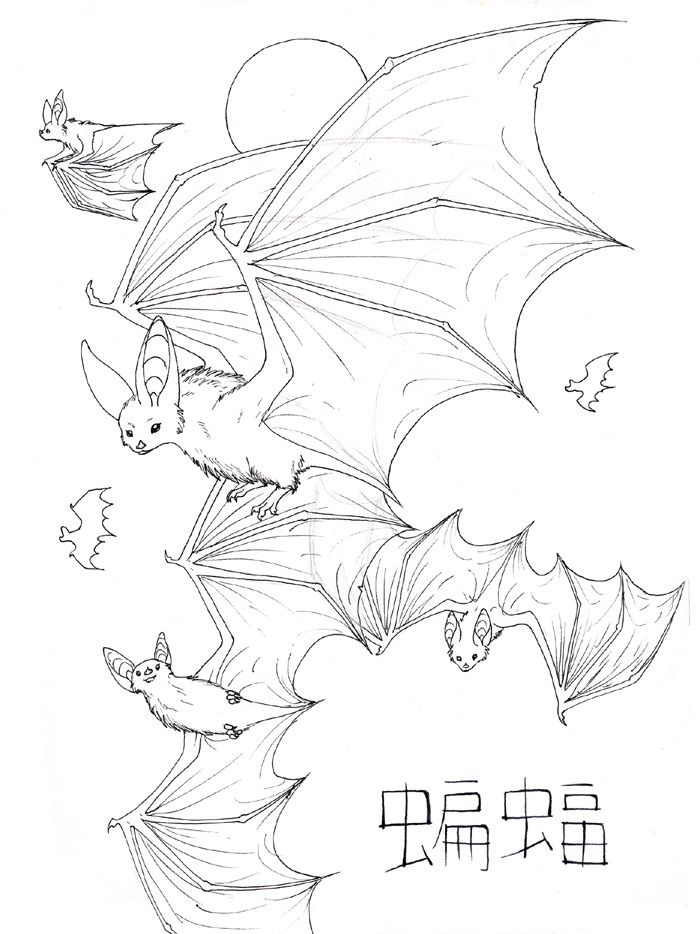 Bat Outline Drawing