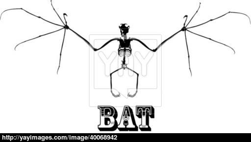 512x290 Bat Skeleton Vector