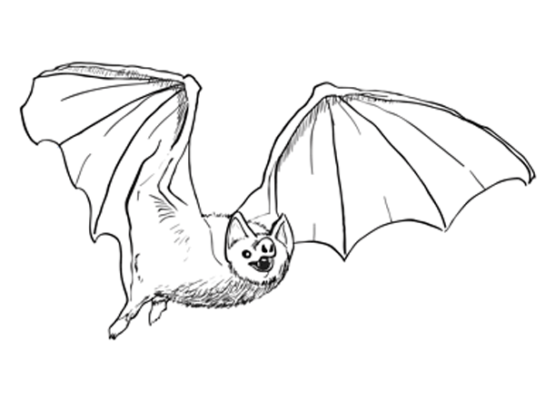 600x450 How To Draw A Bat Sketchbook Challenge 27