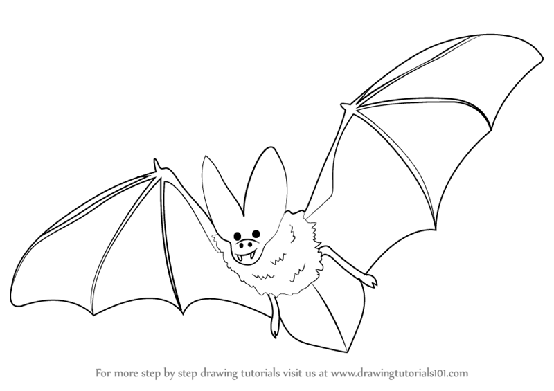 800x565 Learn How To Draw A Bat (Birds) Step By Step Drawing Tutorials