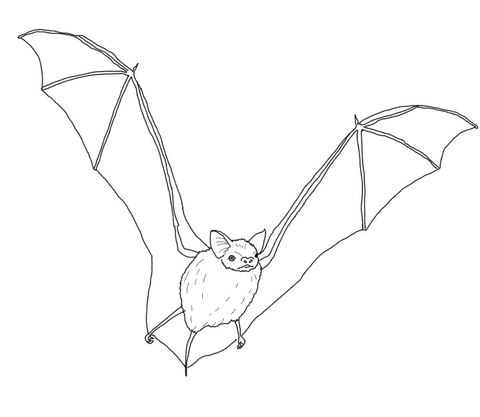 480x417 Big Brown Bat Coloring Page Free Printable Coloring Pages