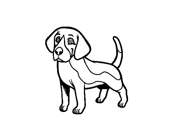 Beagle Dog Drawing at GetDrawings.com   Free for personal ...