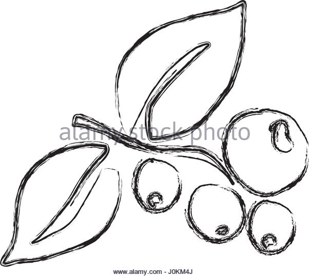 Bean Plant Drawing At Getdrawings Com Free For Personal