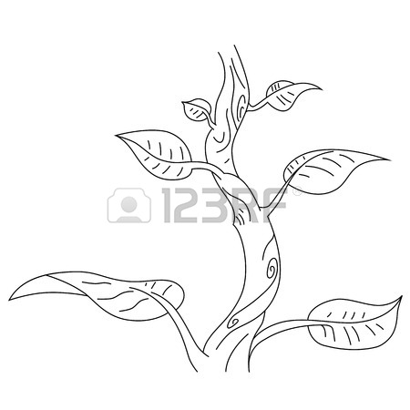Beanstalk Drawing