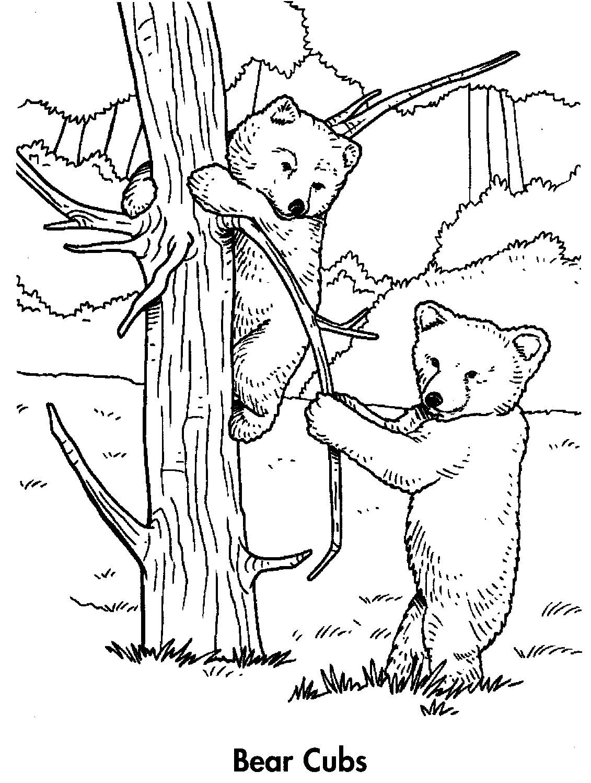 1131x1498 Black Bear Cub Drawings