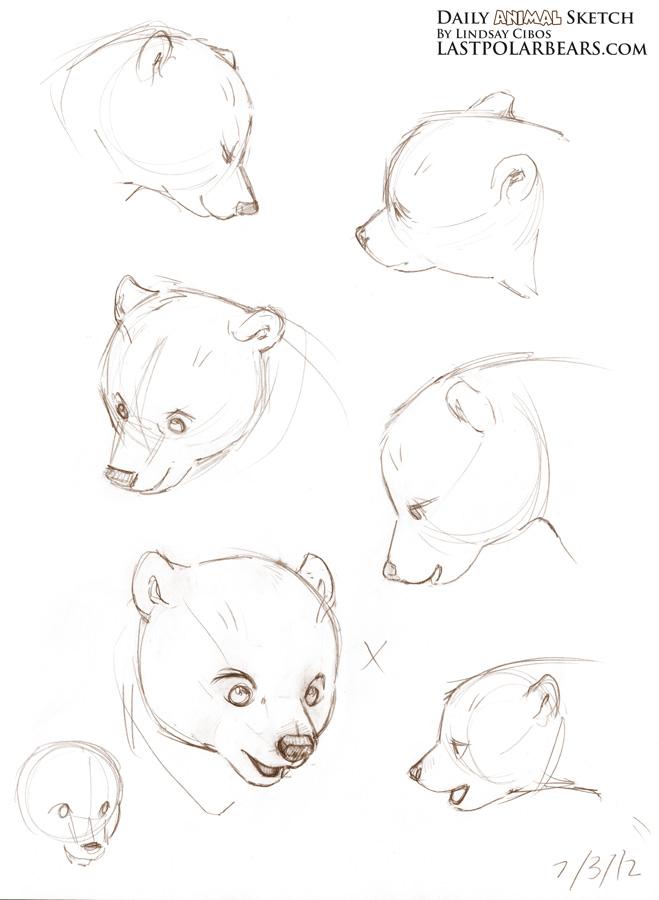 659x900 Sketching Bear Cubs Daily Animal Sketch Arctic Fox And Polar