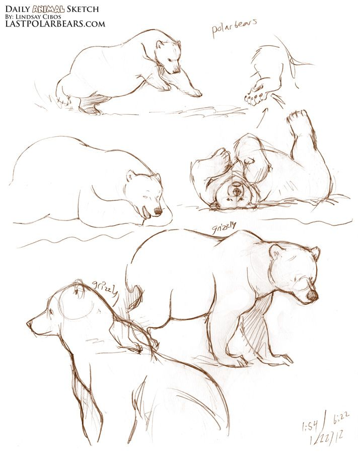 711x900 Sketching Bear Cubs More Quick Gesture Sketches From The Last