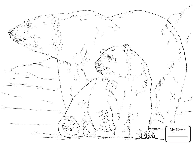 1224x918 cute polar bear cub bears mammals bears coloring pages for kids - Polar Bear Coloring Pages