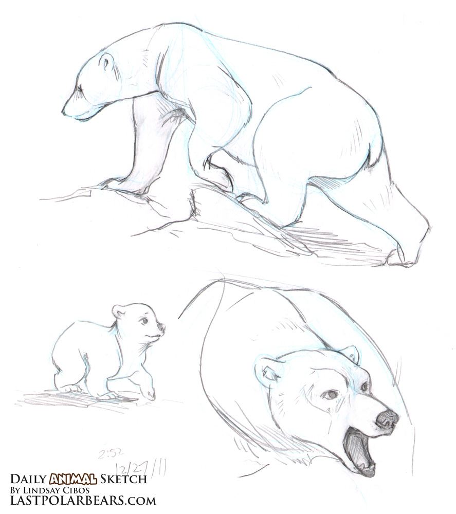 887x1000 Daily Animal Sketch Grizzly And Polar Bears Last Of The Polar