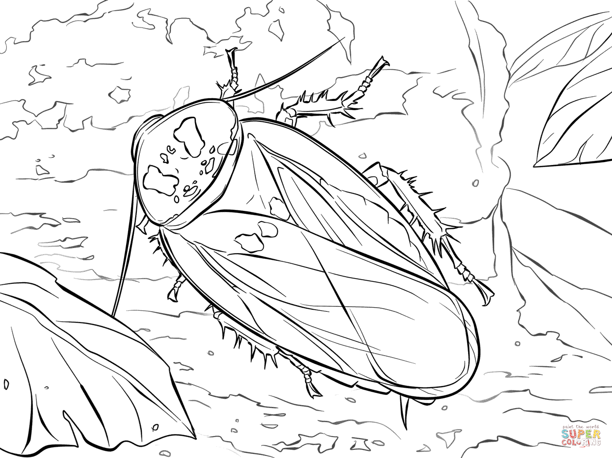 1199x899 Bat Cave Cockroach Coloring Page Free Printable Coloring Pages