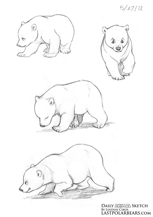 635x900 Drawn Polar Bear Bear Cub
