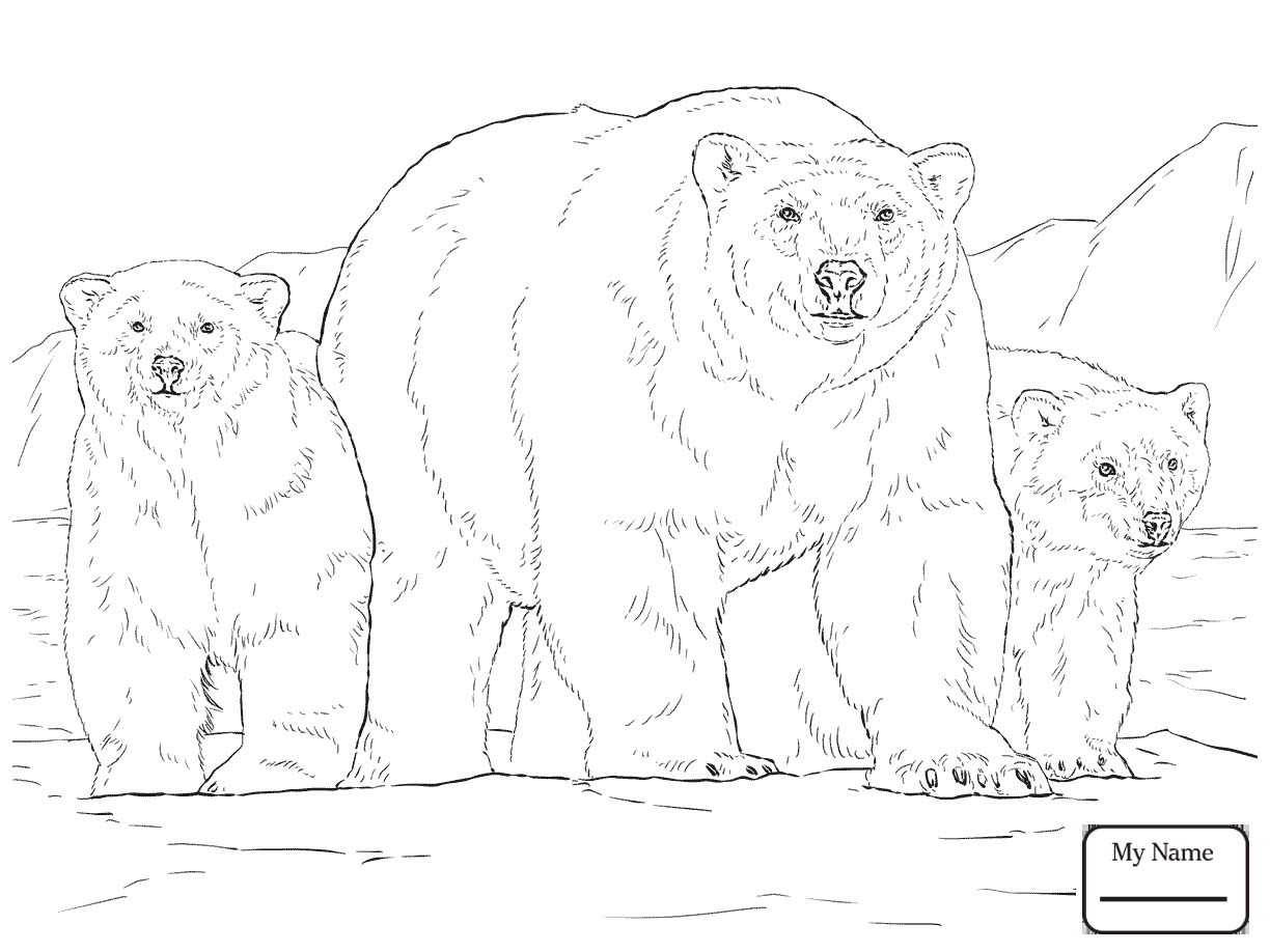 Bear Cub Drawing at GetDrawings.com | Free for personal use Bear Cub ...