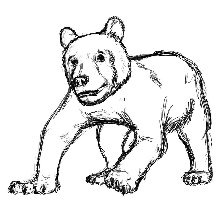 894x894 Cave Bear Cub Sketch By Wsnyder