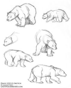 236x292 How To Draw A Bear Outline Drawings, Outlines And Bears