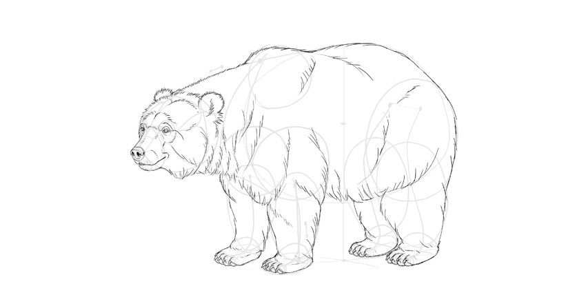 850x428 How to Draw a Bear